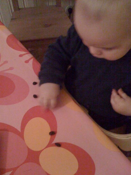 Alfie enjoys some raisins too!