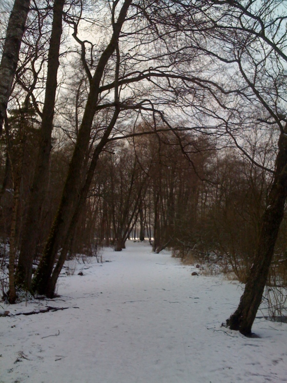 The path down to the lake near our house..