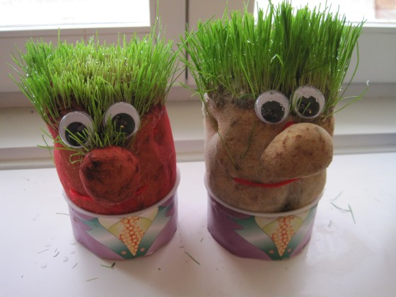"""Grass Heads"" (great fun to give a hair cut!!)"