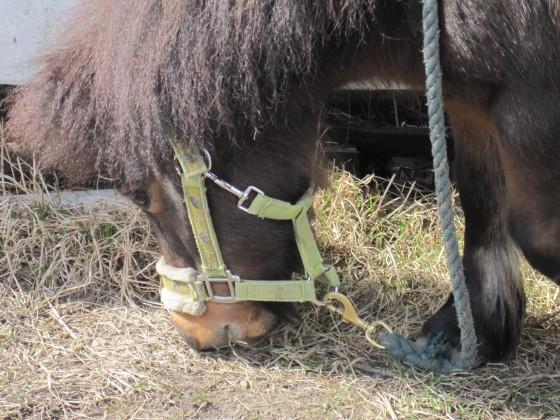 Small pony