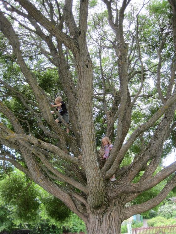 Leon and Maya climbing a (very) tall tree